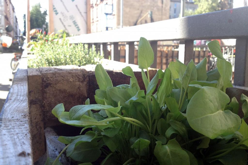oase-paletten-mit-pflanzen-hoehenstrasse-2